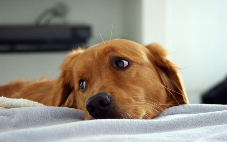 sad-dog-1024x640