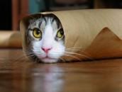 gatto 4